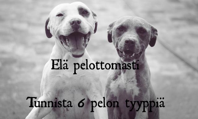 koirat ja pelko.png